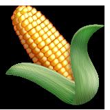 Emoji avatar 146